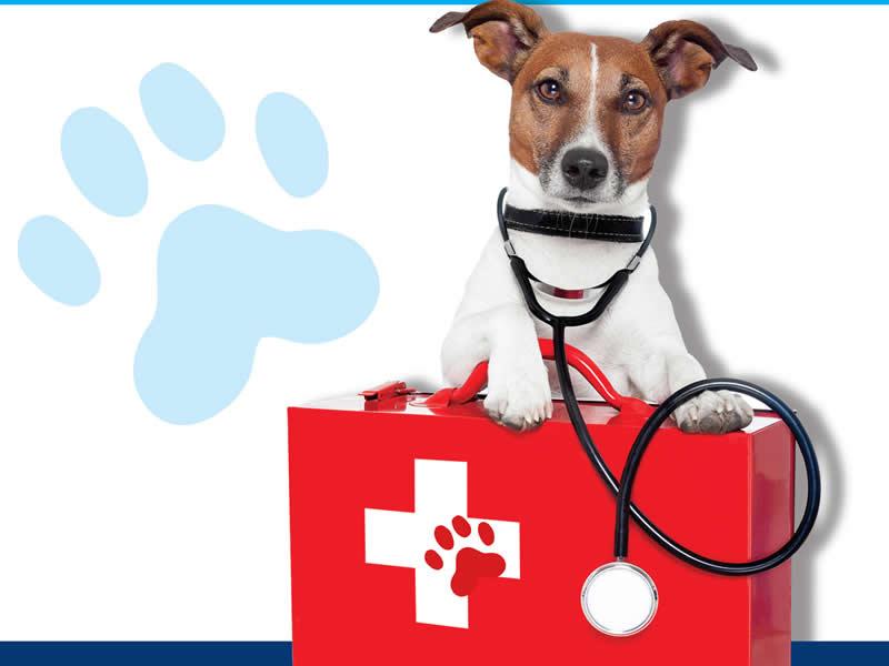 Istruttore Basic Animal Urgency